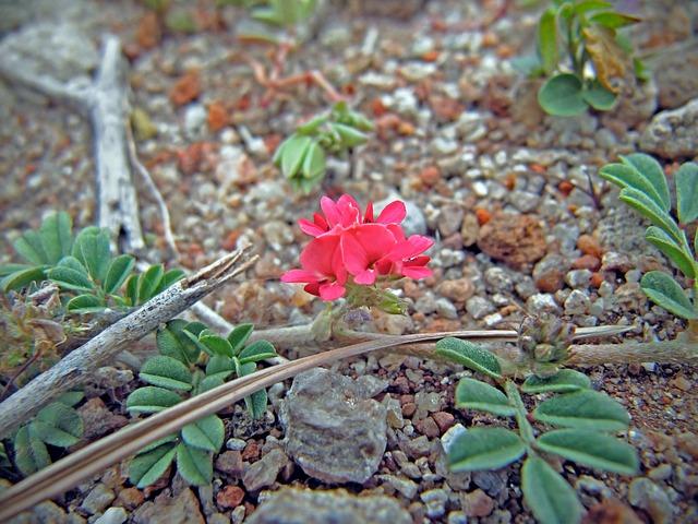 flowerets-577081_640