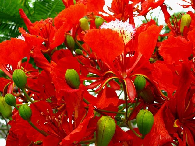 flower-15249_640