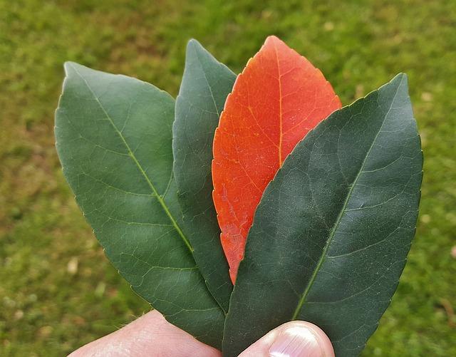 leaves-1380761_640